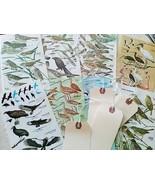 Vintage Miniature Bird Prints Birds Artwork Art Supplies Collage Artist ... - $8.99