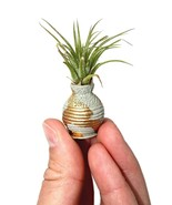 Tiny Air Plant Holder-Air Plant Holder-Air Plant-Desk Garden-Mini House Plant - $8.50