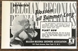 1962 Belgian Begonia Growers Association Print Ad Blossom All Summer Long - $7.64