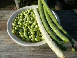 SHIP From US, 25 Seeds Zipper Cream Cowpea, Vegetable Seed AM - $18.99