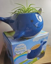 """Live Air Plant in Whale Animal Planter, 5"""" blue glazed ceramic pot, Narwhale image 6"""