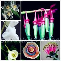 100 Pcs 24 Kinds Different Style California Indoor Flower bonsai seedlin... - $1.38