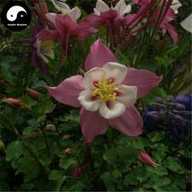 Buy Aquilegia Viridiflora Flower Seeds 100pcs Plant Aquilegia Viridiflor... - $5.99