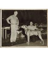 WEIMERANER - Vintage 8 x 10 Black & White Photo SHOW DOG - $12.99