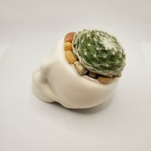 "Sempervivum Succulent in Ceramic Skull Planter 3.5"", Hens & Chicks Live Plant image 6"