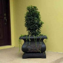Planter Planter Cast Stone Square Bombe Charcoal Lightweight Weather Res... - $2.513,09 MXN