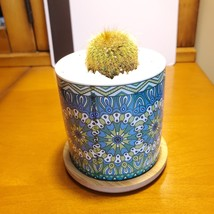 Golden Ball Cactus in Blue Ceramic Mandala Planter Pot, Parodia leninghausii  image 2