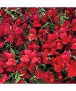 45 Seeds Snapdragon Seeds Candy Showers Red Multi Pelleted Seeds Trailin... - $51.98