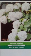 Japanese Snowball Tree Healthy Home Garden Plants Landscape Trees Plant Flower - $96.95