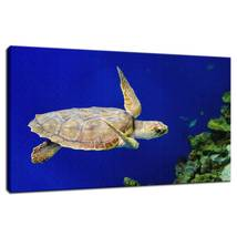 An item in the Art category: Sea Turtle 1 Underwater Wildlife Photo Fine Art Canvas & Unframed Wall Art Print