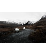 Sheep & Mountains -  Art Picture Poster Photo Print 2SHP - $14.99+