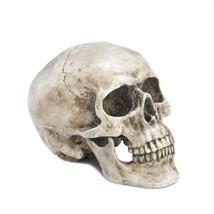 Grinning Skull Decor -Polyresin - $10.22