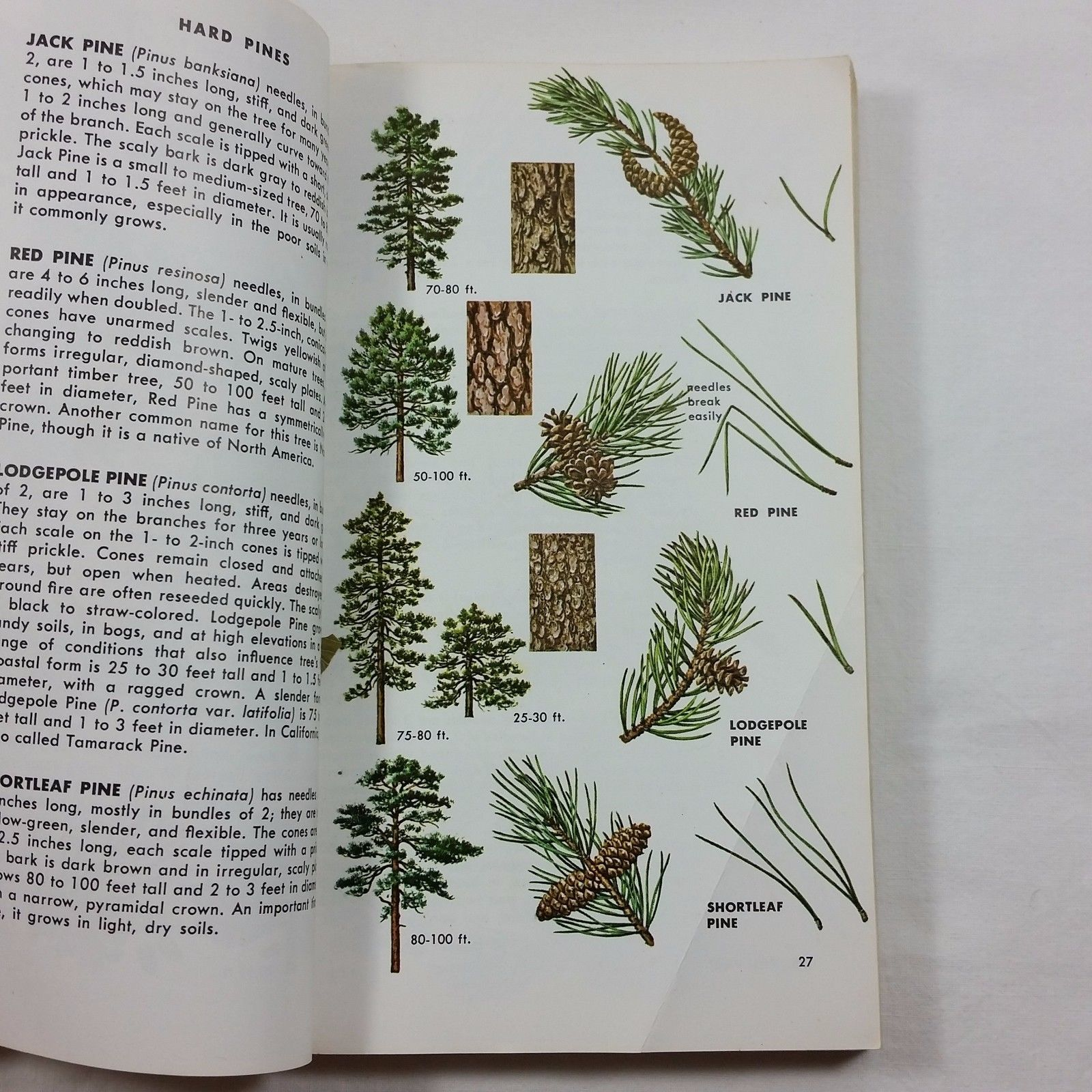 Trees of North America A Guide to Field Identification Golden Vintage Book 1968