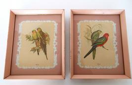 John Gould Bird Lithographs Pair 11 x 9 Ornithology Original Pink Frame ... - $33.99