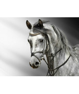 Amazing horse Home Decor Canvas Print, choose your size. - $6.00+
