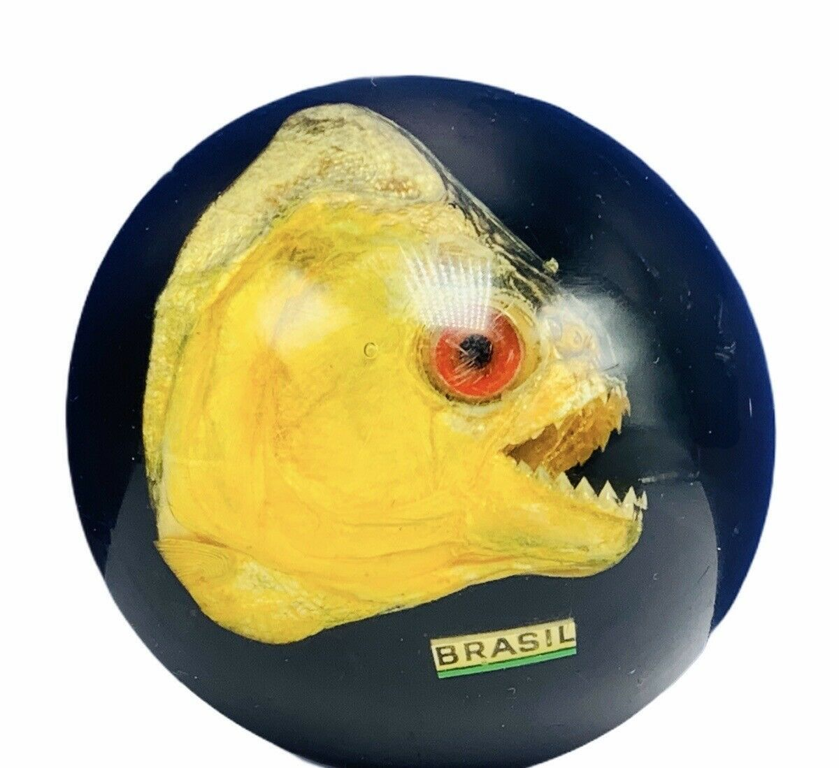 Primary image for Piranha taxidermy paperweight sharp teeth fish nautical marine vtg collectible