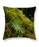 Single Fern on Bed of Moss, Throw Pillow, seat ... - $41.99 - $69.99