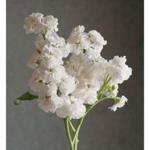 Quartet White Stock Seeds Edible Flower Seeds - $8.99