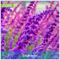 100pcs Sage Seed Grass Seeds Bonsai Plants For Home Garden Blue Grass Seed - $4.76