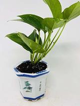 """Golden Devil's Ivy Pothos 4"""" Porcelain Elegance Pot - $26.45"""