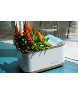 Dewplanter: The Water Generating Planter, perfect for flower, indoor plants - $60.00