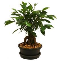 Plant Ficus Bonsai Tree Plastic Pot Garden Indoor Outdoor Houseplant Bes... - €25,03 EUR