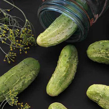 SHIP FROM US ORGANIC WISCONSIN SMR-58 PICKLING CUCUMBER SEEDS - 2 OZ SEE... - $57.36