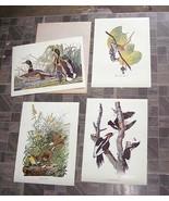 Bird Art Prints White crowned sparrow Mallard duck Ivory billed woodpeck... - $18.99