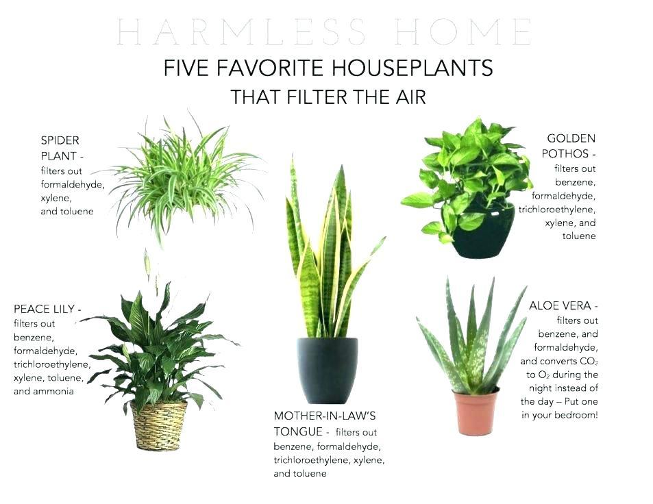 "Combo of 4 Best Air Clean Live Plants Fit 4"" Pot Clean Air Plants for Your Home"