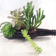 Glass Succulent Planter / Bottle Garden 7'' long  - $29.48