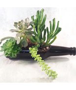 Glass Succulent Planter / Bottle Garden 7'' long  - €23,80 EUR