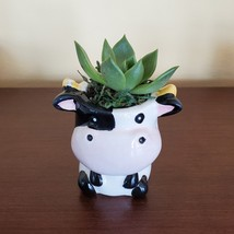 Cow Planter with Succulent, Live Plant Gift, Echeveria Agavoides, Farm Animal