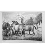 1801 ORIGINAL ETCHING Print by Howitt - Horses in Farmyard Eating Hay - $20.92