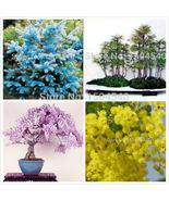 4popular bosai tree seeds total more than 60 seeds mini bonsai see thumbtall