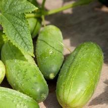 100Pcs Cucumber Homemade Pickles Vegetable Seeds Cucumis Sativus Seed - $19.84