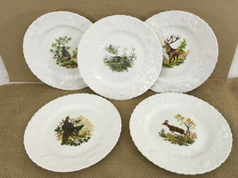 Queens Rosina China Co Fine Bone China England Wildlife Art Salad Plate - $50.00