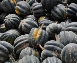 Table Queen Acorn Squash Seed - Heirloom Winter Vegetable Seeds (2gr to ... - $4.45+
