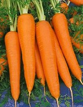 300 Seeds Carrot Seeds, Imperator 58, NON-GMO, Heirloom - $6.93