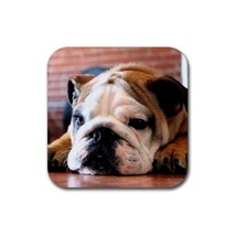 Cute English Bulldog Puppy Puppies Dogs Pet Animal (Square) Rubber Coaster - $2.99