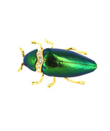 Vintage Rare Egyptian Revival Genuine Beetle Cicada Wing Gold Tone Brooc... - $179.99