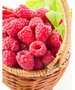 large, sweet and firm summer BERRIES - Potted Tulameen Raspberry Plants - $31.60+