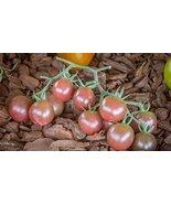 25 Seeds of Negro Azteca Tomato / Solanum lycopersicum - $13.85