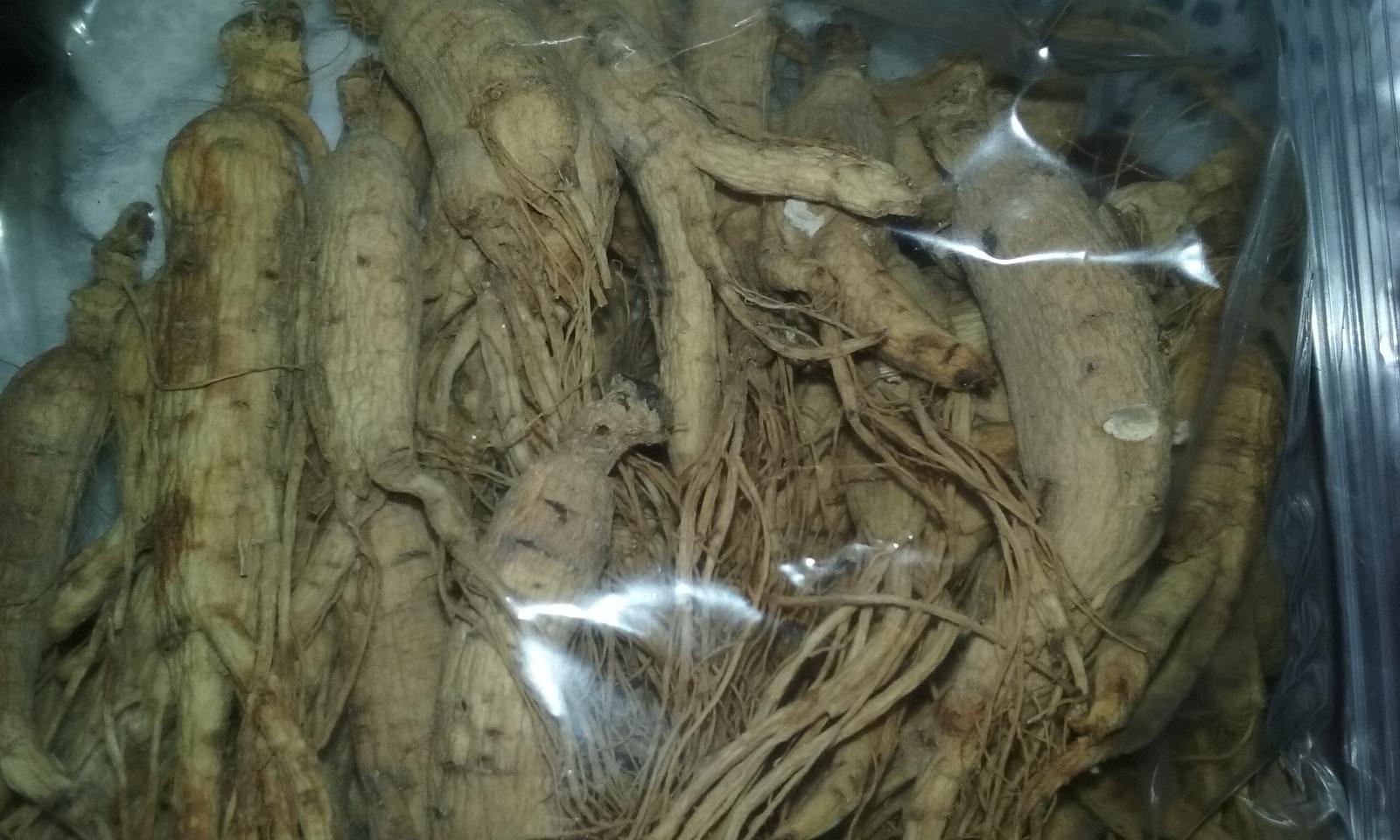 16 Ounce 448 Gram Wild Ginseng Root