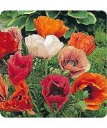 500 Poppy (Pizzicato) Mix Seeds - $6.93