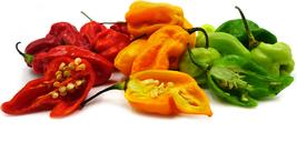 USA Grown HOT Jamaican Scotch Bonnet Peppers SEEDS  No GMOs 25 Seeds - $3.95