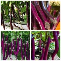 30 Seeds Purple line eggplant Seeds Solsnum melongena Vegetable Seeds C150 - $13.58