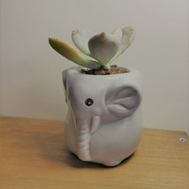 """Elephant Pot with Succulent, Live Plant in Grey Ceramic Planter 2"""" image 4"""