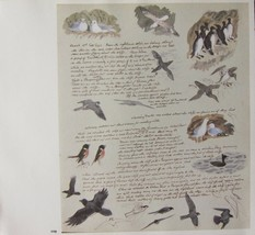 BEAUTIFUL VINTAGE BIRD PRINT ~ BIRDS STUDIES SEAGUL FALCON etc ~ TUNNICL... - $52.50