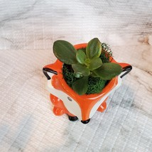 Animal Planters with Succulents, Fox and Raccoon, 3 inches, ceramic image 9