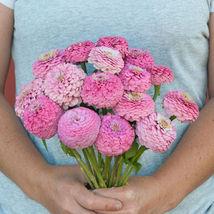 Oklahoma Pink Zinnia Seed, Zinnia Flower Seeds - $21.00